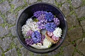 Various different coloured hyacinths in a black plastic bucket on cobblestones