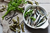 Fresh, raw sardines with parsley and bay leaves