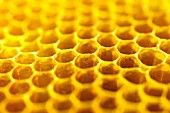 Honey on a honeycomb (close-up)