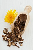 Dried dandelion root in a wooden scoop for dandelion tea