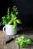 Mixed fresh Italian herbs (basil, sage, fennel, rosemary and thyme) in an enamel mug