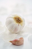 Garlic bulb and clove