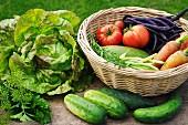 Sommerliche Ernte aus dem Garten: Salat, Gurken, Dill, Petersilie, Bohnenkraut, Bohnen, Möhren und Tomaten