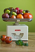Various types of tomatoes in different colours and shapes on a pair of old-fashioned kitchen scales