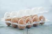 Speckled mini chocolate eggs in a plastic egg box