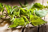 Fresh stinging nettle leaves