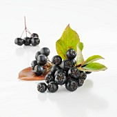 Fresh aronia berries with leaves