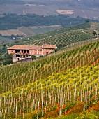 Frühlingstimmung mit blühenden Mohnblumen und Senfblüten im Weinberg Montforte d Alba, Piemont, Italien