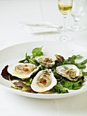 Fresh oysters on a bed of lettuce