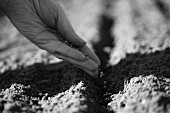 Seeds being sprinkled into a bed