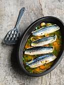 Marinated mackerel fillets