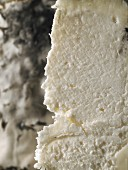 English goat's cheese, close-up