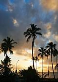 Palmen vor Abendhimmel an der Küste Tansanias