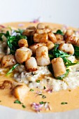 Scallops on a bed of risotto with a wild mushroom sauce