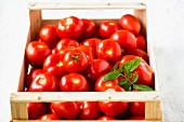 Tomatoes in a wooden crate with tomato leaves
