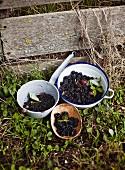 Frische Brombeeren in Schüsseln und Sieb im Garten