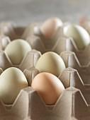 Mehrfarbige Araucaner Hühnereier im Eierkarton