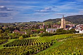 View over vineyards at En Paradis with the Church of St-Just and Collegiate Church of Notre-Dame. Arbois, Jura, France.