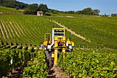 Machine harvesting Sauvignon Blanc grapes in vineyard of Domaine André Robineau. Sancerre, Cher, France. [Sancerre]