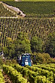 Leaf stripping (effeuilleuse) before harvest in Sauvignon Blanc vineyard of Domaine Lucien Crochet. Bué, Cher, France. [Sancerre]