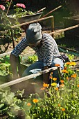 Gardener working in vegetable patch