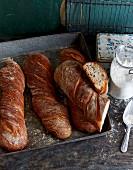 Pane rustico (white bread, Italy)