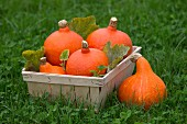 Pumpkins in a wooden basket in a meadow