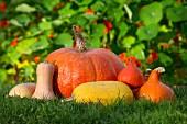 Various pumpkins in a field