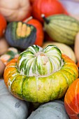 A turban squash amongst other types of squash