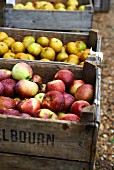 Various apples in crates