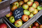 A wooden crate of Cox's apple
