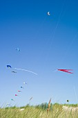 Colourful kites being flown in the dunes on the beach at Warnemünde
