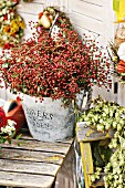 Vintage zinc bucket of red autumn berries with hops in foreground