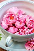 Many small pink roses in teacup