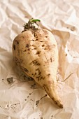 A sugar beet on a piece of paper