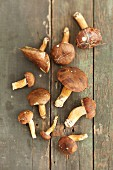 Bay boletes on a rustic wooden table