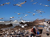 A fisherman cleaning his catch surrounded by seagulls on the beach at Essaouira, Morocco