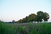 Felder zwischen Katschow und Mellenthin in Abenddämmerung, Usedom