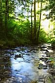 Lillach stream in Weissenohe (Franken, Germany)