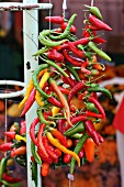 A garland of colourful chilli peppers