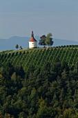 Weinberg mit kleiner Kapelle, Steiermark