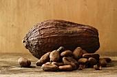 Theobroma cacao, Cocoa bean, White background