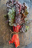 A bunch of red chard