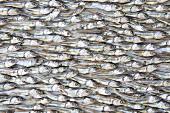 Dried fish (full frame)