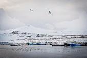 Fischerort Olafsvik im Winter (Snaefellsnes, Island)