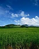 Weite Landschaft mit Zuckerrohrfeldern; Mauritius, Afrika