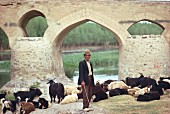 A goatherd with a herd of goats under the Shahrestan Bridge, Isfahan, Iran, Middle East