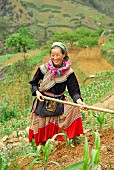 A Hmong woman working in the fields, Bac Ha, Vietnam