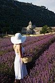 Woman in white in a lavender field looking towards the Senanque Abbey, Gordes, Provence, France