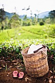 A tea pickers basket and shoes at a tea plantation, Central Highlands, Nuwara Eliya, Sri Lanka, Asia